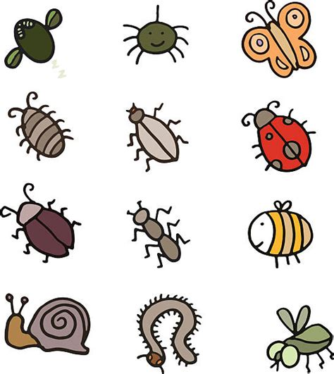 Best Sow Bug Illustrations, Royalty-Free Vector Graphics