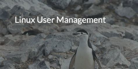 Linux User and Group Management - Explained - FowuTech